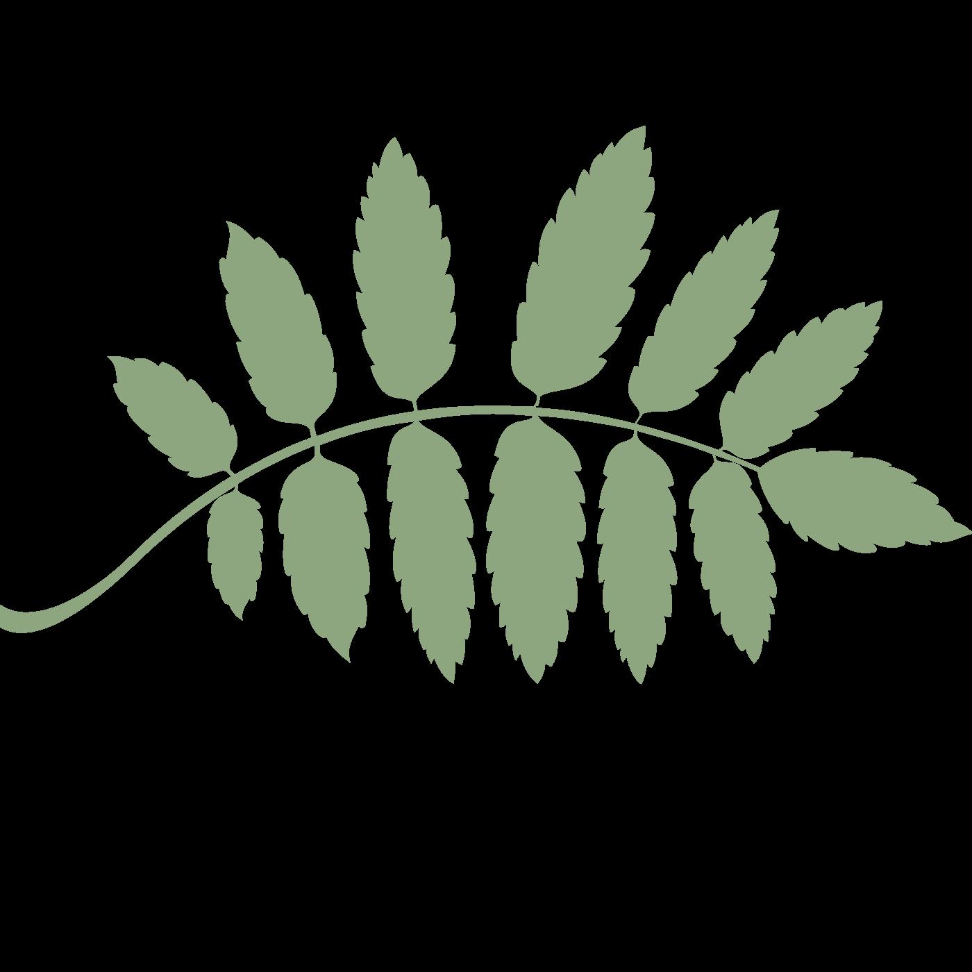 Blatt grün